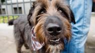 So seh'n Sieger aus: Mischlingshund Toby