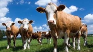 Kartellamt will Milchmarkt aufmischen