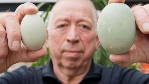 Schon wieder ein Riesen-Ei aus Wolfenbüttel