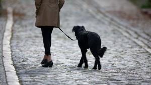 Hartz-IV-Aufstocker können Hundehaftpflicht nicht absetzen