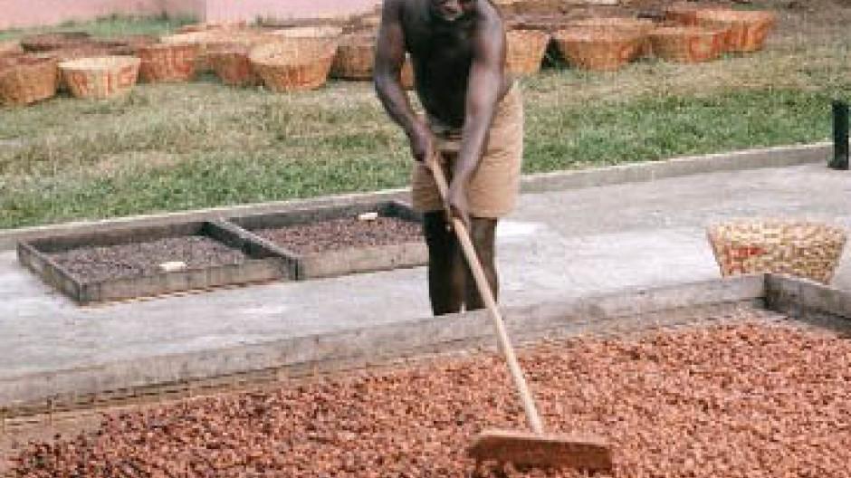 Als Investment wegen des Überangebots uninteressant: Kakao