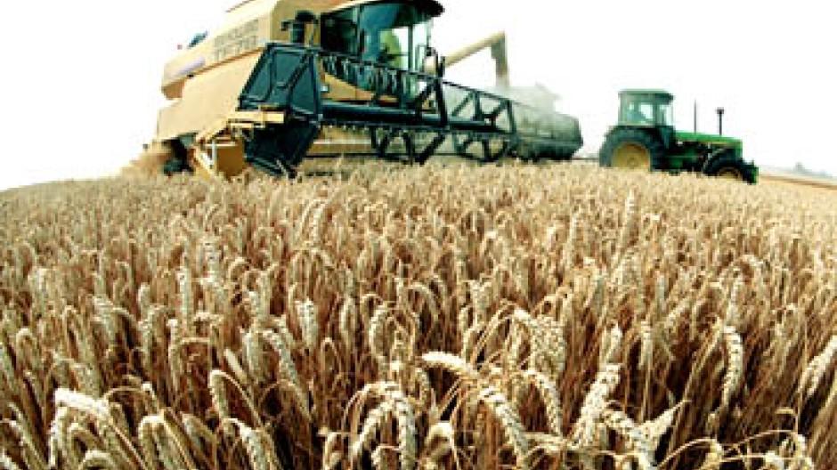 Weizen ist teuer geworden
