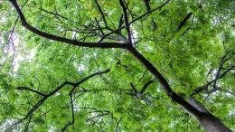 Weniger grüne Anleihen