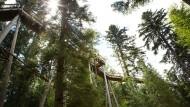 Der Baumwipfelpfad auf dem Sommerberg im Schwarzwald ist 1250 Meter lang.