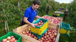 Der Deutschen liebstes Obst wird teurer