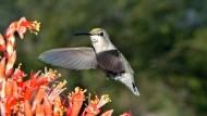 Pate für Kreditderivate: Der Kolibri hielt bei der Commerzbank für den Namen her
