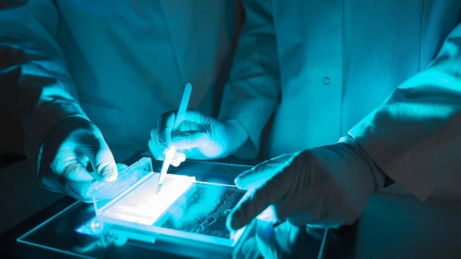 Krebsforschung in den Labors des Mainzer Biotech-Unternehmens Biontech: Es ist nur eines von vielen deutschen Start-ups, die momentan mehr Investitionen erhalten.