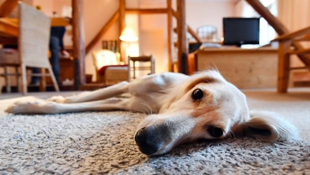 Steuern sparen mit dem Hund