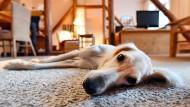 Hundeglück ohne Hindernisse: Wer einen Hund besitzt kann auch bei seinen Steuern sparen.