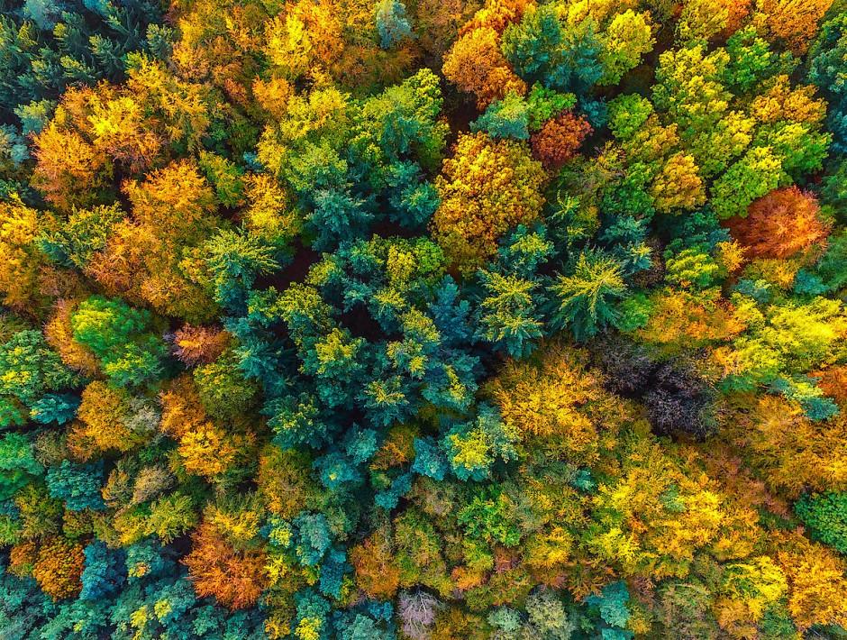 Herbstlich bunt gefärbter Wald mit Laub- und Nadelbäumen breitet sich nahe Sieversdorf in Brandenburg aus.