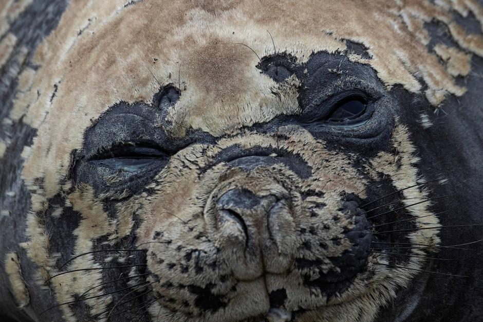 Was sieht der Seehund auf Snow Island?