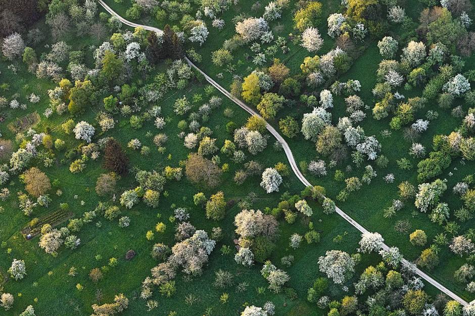 Im Vorland der Schwäbischen Alb liegt eine der größten zusammenhängenden Streuobstlandschaften Europas. Während der Obstbaumblüte beeindruckt das Muster aus grünen Wiesen und weißen Bäumen.
