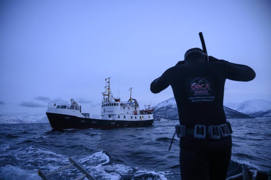 Mit dem Beiboot der M/S Sula nähert sich die Tauchergruppe den Walen.