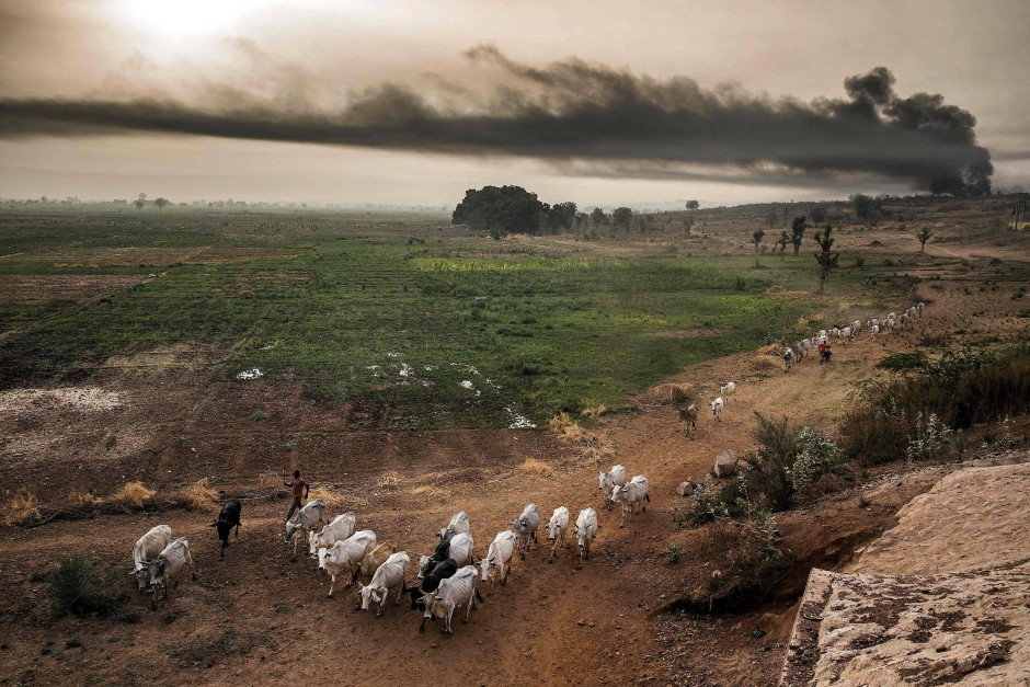 Die Fulani ziehen weiter: Wegen der massiven Ausweitung der Landwirtschaft in Nigeria wird das Weideland für die Hirten knapp.