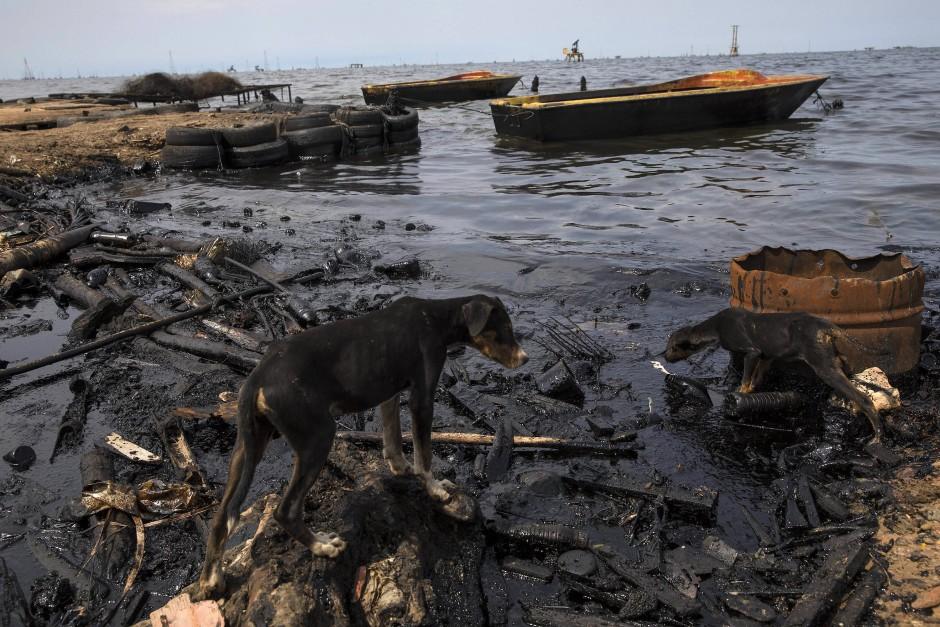Dorfhunde suchen an den Ufern von Cabimas nach Fischabfällen.