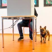 Mops Charlie (7, helles Fell) und die französische Bulldogge Kairo (2), am Sonntag im Wahllokal in Erfurt.