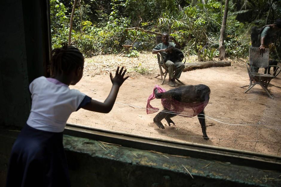 Manche Tiere haben Glück. Diese Bonobos wurden vor Wilderern gerettet und leben nun in einem Tierheim in der Hauptstadt Kinshasa.