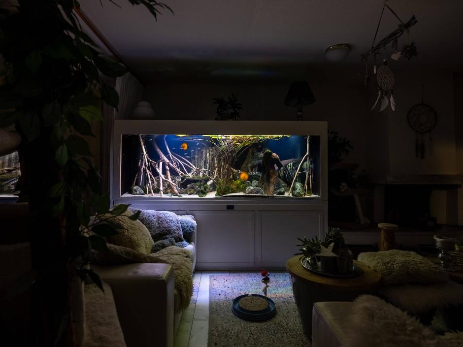 Inspiriert von den großen Entdeckern und Expeditionen der Vergangenheit widmet sich der Niederländer Jorritt T. Hoen exotischen Aquarien und Terrarien in heimischen Wohnzimmern. Seine Bilder zeigen diese Miniatur-Landschaften aus entlegenen Erdteilen, die ihre Besitzer in ihrem Zuhause aufgestellt haben.