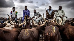 Der Kampf ums Weideland in Westafrika