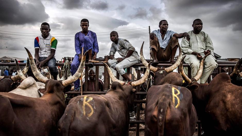 Eine Gruppe von Hirten auf dem Kara-Viehmarkt in der nigerianischen Hauptstadt Lagos.