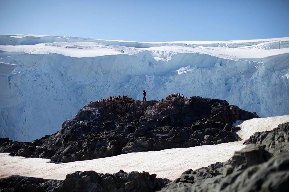 Mit dem Handzähler vor Ort: Wissenschaftler Steve Forrest ist auf Anvers Island ganz nach oben geklettert.