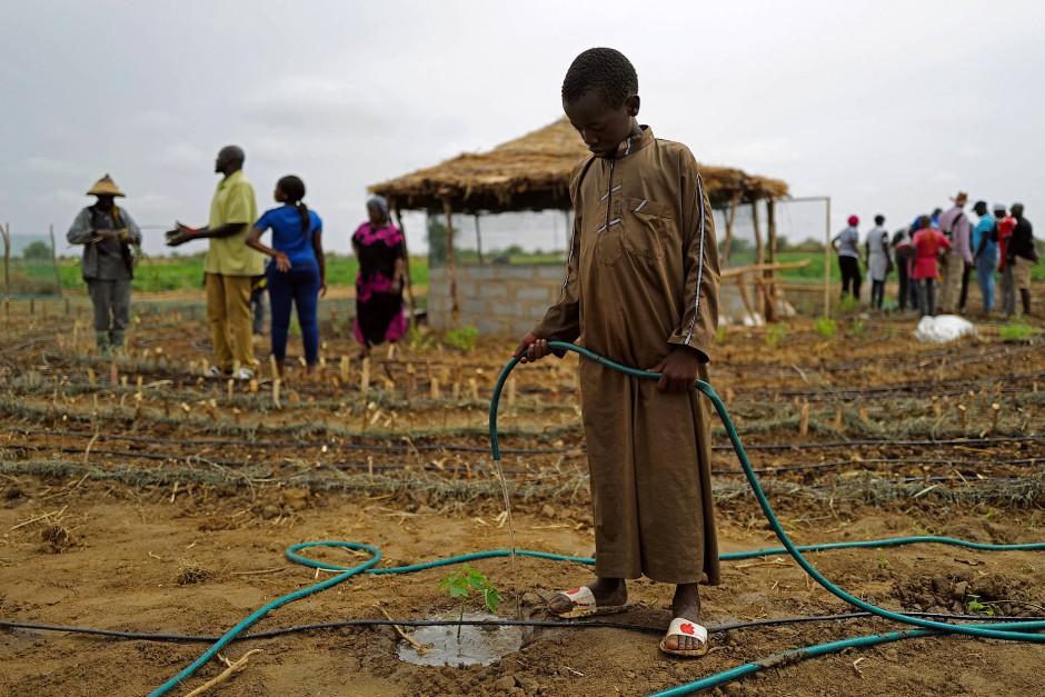 """Ein Junge wässert die Pflanzen in einem der """"Tolou Keur"""" im Dorf Boki Diawe."""