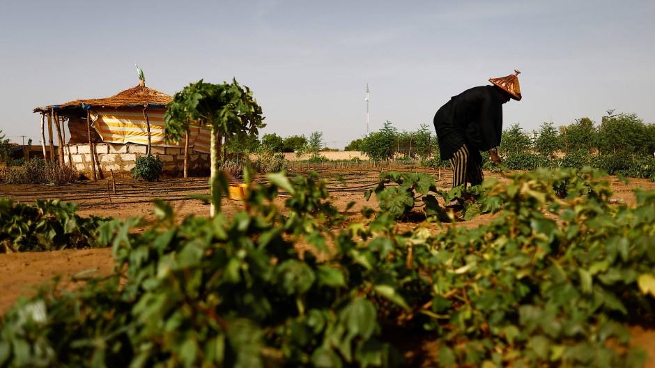 Ibrahima Samba Diop schaut nach den Pflanzen in einem der runden Gärten.