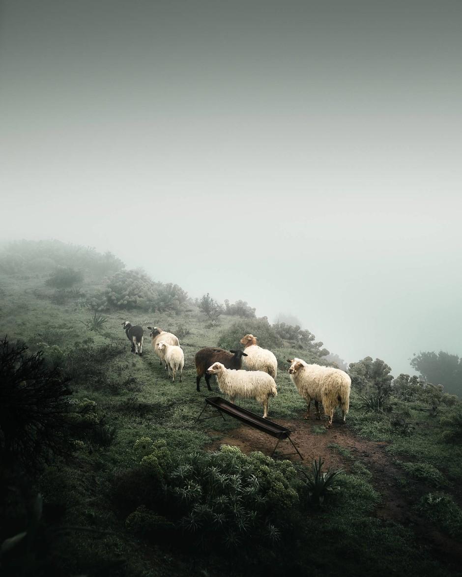 Den griechischen Landespreis gewinnt Thoedoros Apeiranthitis, der beim Besteigen des Berges Zas (Zeus) auf Naxos im aufziehenden Nebel auf eine Schafsherde stieß.