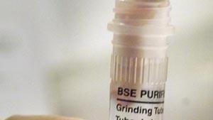 Gefährdet BSE mehr Menschen als angenommen?