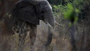 Elefanten in der Kunsttherapie
