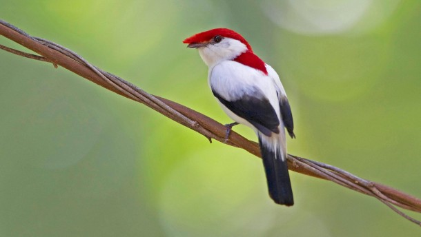 Liste der 100 am staerksten bedrohten Arten veroeffentlicht