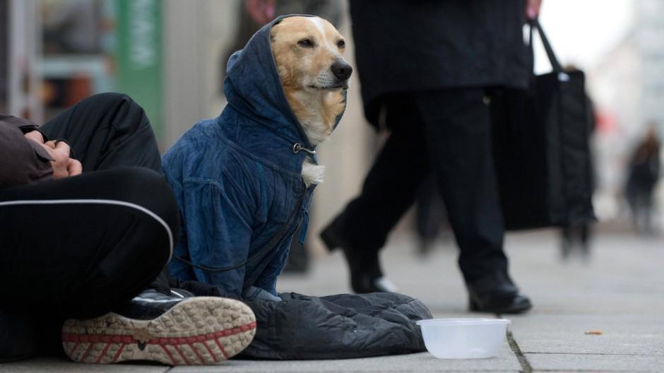 Warm anziehen: Der Mensch will den perfekten Hund.