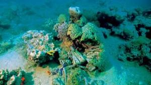 Großinventur in den Gärten der Meere