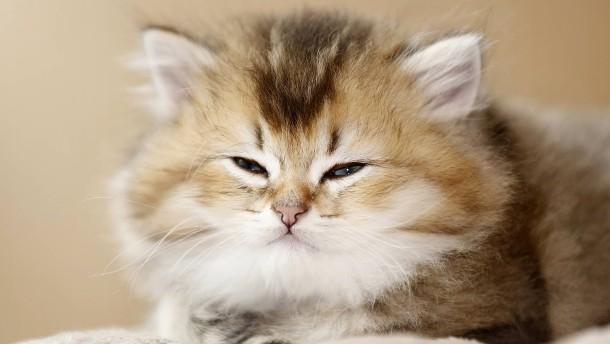 Die Katze kennt ihren Namen