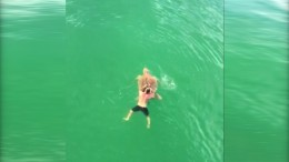 Meeresschildkröte am Haken