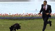 An der langen Leine laufen lassen: First Dog Bo gibt dem Präsidentden das Tempo vor