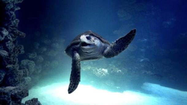 Platz für die Riesenschildkröten