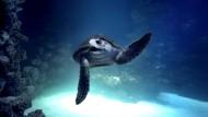 Riesenschildkröten haben ein neues Zuhause