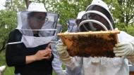 Teaser Bild für Stadtbienen in Frankfurt