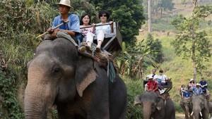 Elefant trampelt britischen Touristen zu Tode
