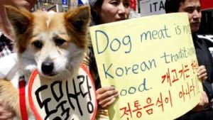 Gegen Hunde als Nahrungsmittel