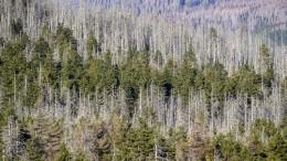 Waldschäden nehmen rasant zu