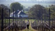 Die englische Weinrevolution