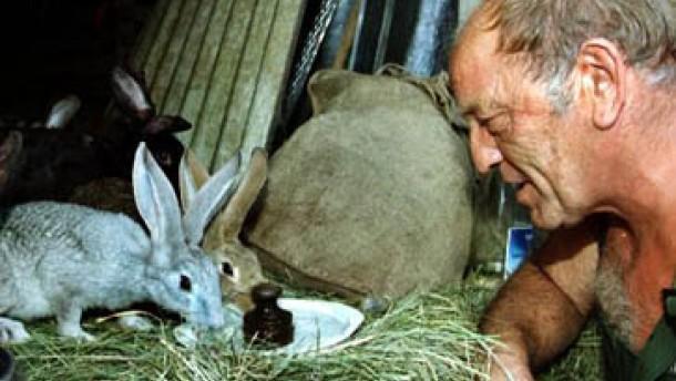 Tierschützer: Mastkaninchen werden systematisch gequält
