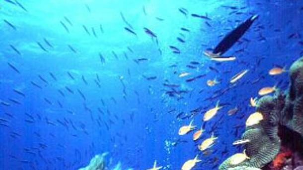 Australien will das Great Barrier Reef besser schützen