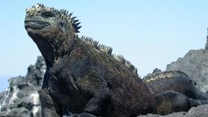 Godzilla muss gerettet werden
