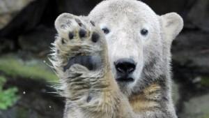"""""""Wir werden Eisbär Knut behalten"""""""