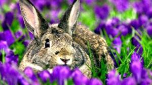 Kaninchen graben 700 Jahre altes englisches Landhaus aus