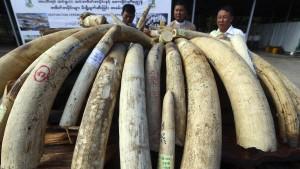 Schmuggler verdienen weniger Geld mit Elfenbein und Nashörnern