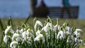 Frühlingshafte Temperaturen am Wochenende
